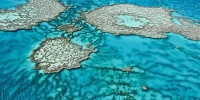 July 8 Lunch For The Great Barrier Reef Fundraiser - Brisbane