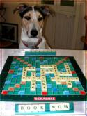 Puzzles4Pooches