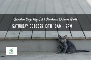 Cat and Kitten Adoption Day @ My Pet Warehouse Osborne Park - PRA