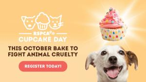 Cupcake Day : RSPCA South Australia