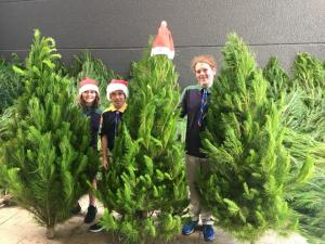 2019 Real Christmas Trees -1st2nd Harbord Scouts Fundraiser