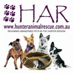 Hunter Animal Rescue Foster Carer Information Session