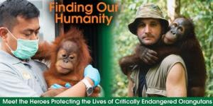 The Heroes Saving Orangutans