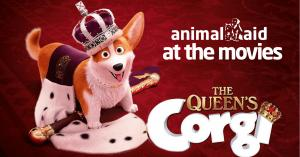 Animal Aid at the movies - The Queens Corgie