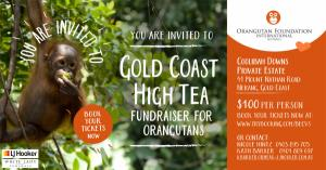 Gold Coast High Tea Fundraiser for Orangutans