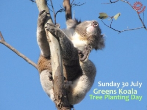 Jul 30 Koala Tree Planting for National Tree Day - Little River VIC