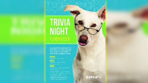 June 3 Rspca Trivia Night Bomaderry NSW